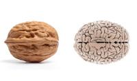 orah-mozak