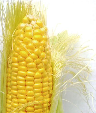 kukuruzna svila ilustracija.