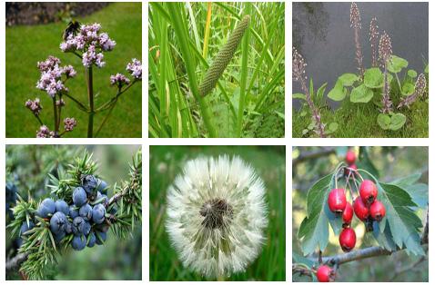 ljekovite biljke novembarske infografik.