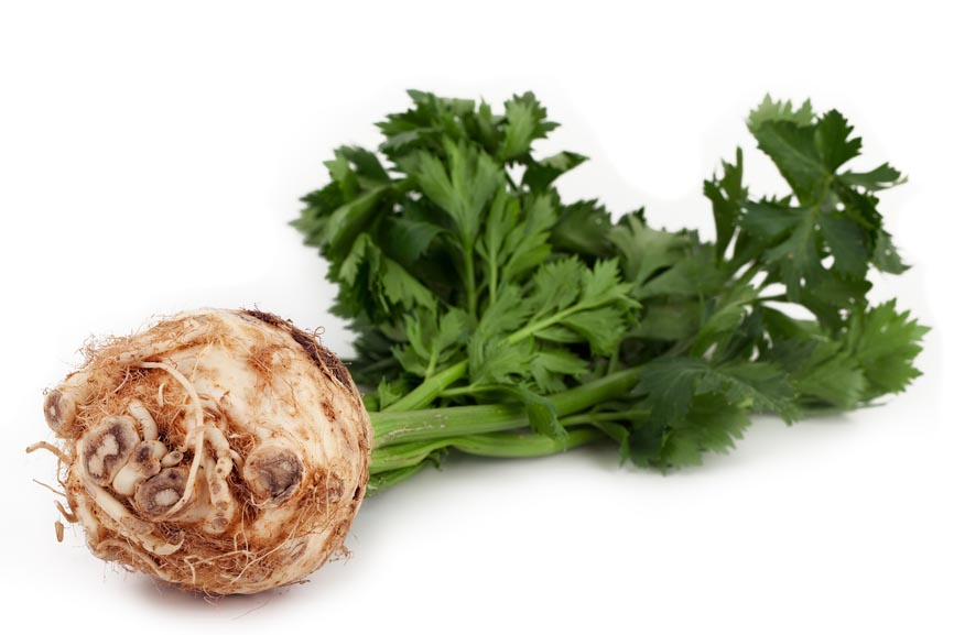Celer lekovita svosjtva