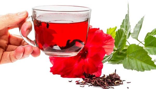 hibiskus lekovita svojstva