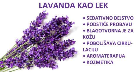 Lekovita svojstva lavande