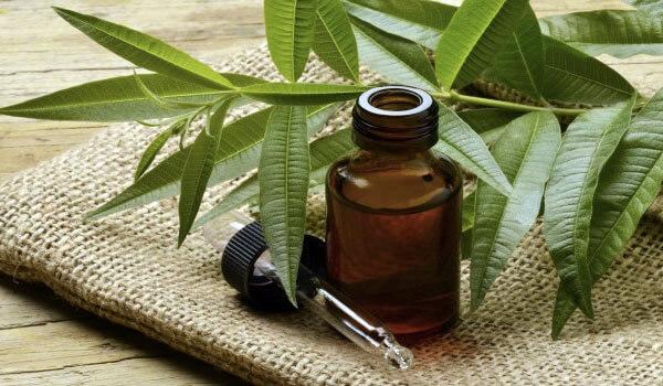 ulje cajevca kao lek