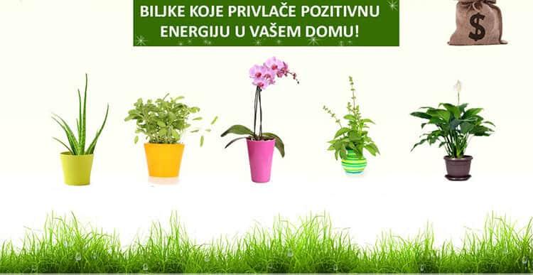 Biljke za pozitivnu energiju