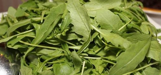 rukola salata lekovita svojstva