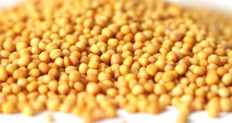 seme slacice