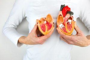 ilustracija kardiovaskularnog sistema.